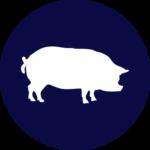 свиноводство оборудования для свиноводства