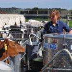 молочное такси для фермы